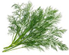 DILL image